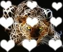 amour de léopard