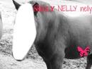 visage tres chevalin (nelly)