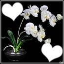 """""""Orchidées"""""""