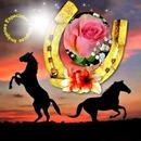 caballos en la noche