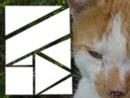7 photos avec un chat en fond.