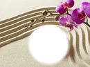Sable - orchidée - zen