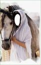 """Femme """" gitane """" avec cheval"""