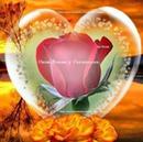 corazon con rosa roja