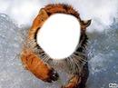 tigre cadre 0.1