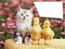 Ducks & Cat