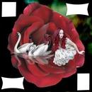 fleur rouge avec cygnes et femme