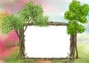 Nature - arbres