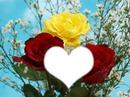 *Roses x3*