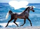 cheval coeur
