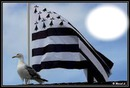 drapeaux breton