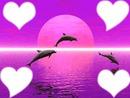 amour dauphin