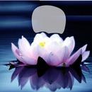 Lotus.1