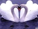 Moi et toi je t'aime mon coeur