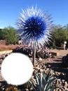Chihuly blaue Sonne