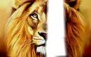melanger de toi avec un lion