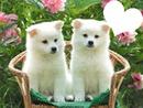 mis cachorros