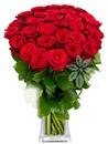 ruže 2