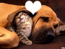 L'amour animaux