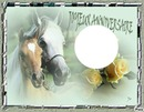 Anniversaire chevaux