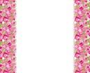 stephy cumbia rosa