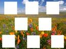 champ de fleurs 8 cadres