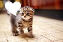 Cat heart speech bubble