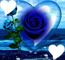 roses bleues avec coeurs