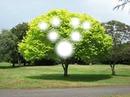 aile ağacı
