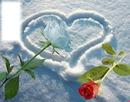 Roses + coeur avec neige