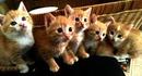 tes yeux avec petits chats