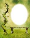 Nature-plante verte-banc de pierre