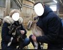 couple éleveur de chèvres
