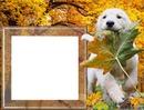 Podzim, pes, listí