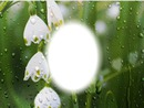 snowflake in rain
