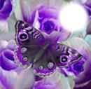 precious butterfly bb