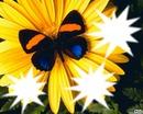 ///**Papillon de Nuit///**