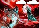 2 loups avec reflet rouge 2 photos
