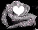jolie rose mouillé