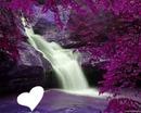 cascade violette
