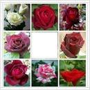 Cc Rosas varias