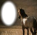 cadre cheval