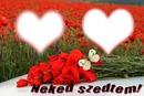 Pipacsok, dupla szeretet. Andrea51