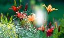 Cc bellas flores
