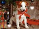Pour Noel Une Petite chienne ♥