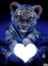 le ptit tigre