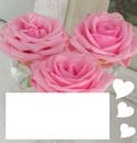 Trandafiri roz! ( pink roses)