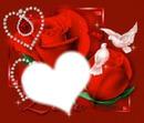 rózsa és galamb