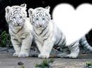 Mes tigres chéries