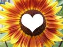 fleur coeur